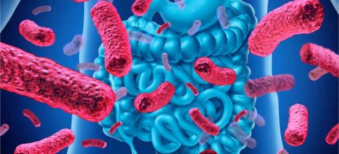 zoetstoffen-darmmicrobiota-niet-schadelijk