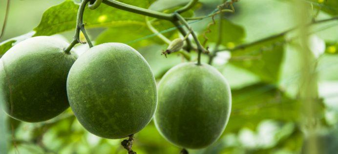 monk-fruit