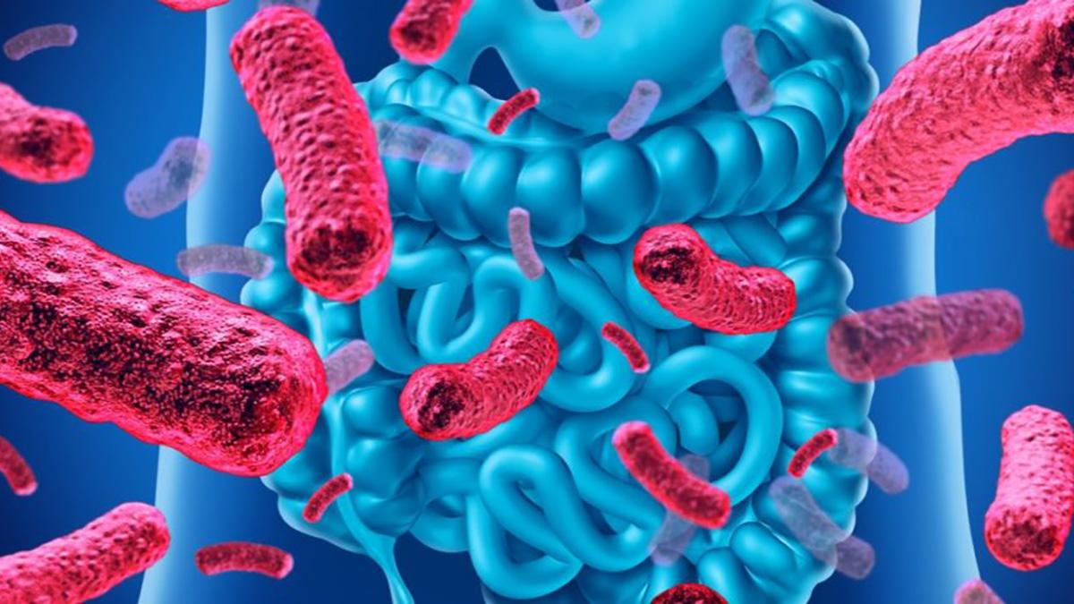 zoetstoffen-niet-schadelijk-darmmicrobiota